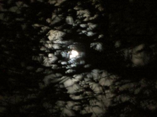 Moonthrutrees blog