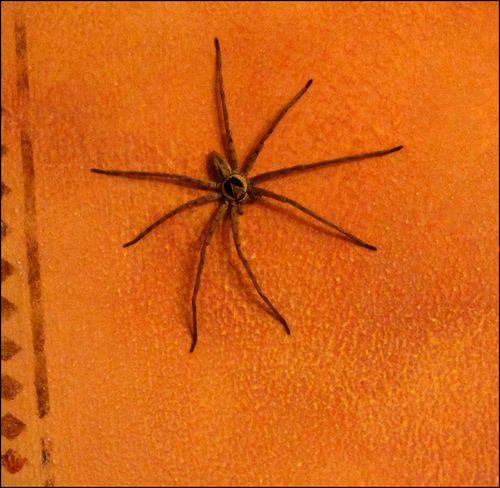 Spiderbig blog