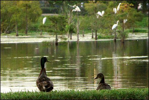 Two ducks blog