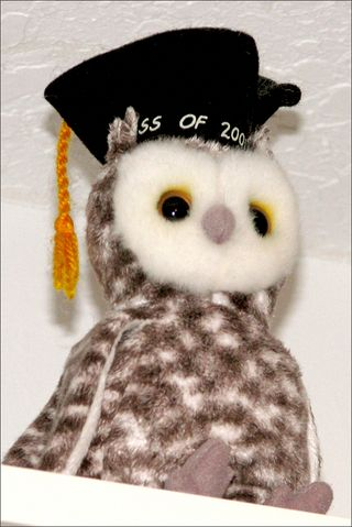 Owl blog