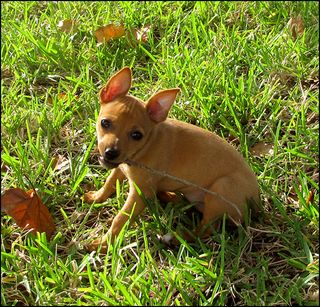 Barkdog blog
