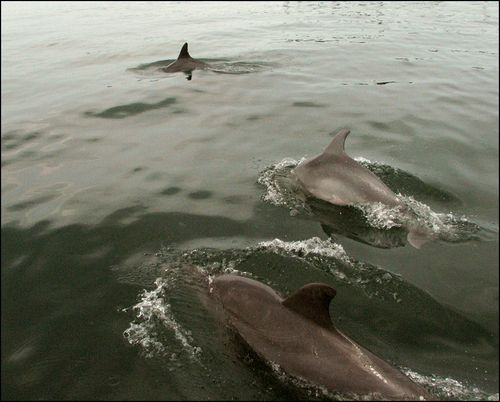 Dolphins blog
