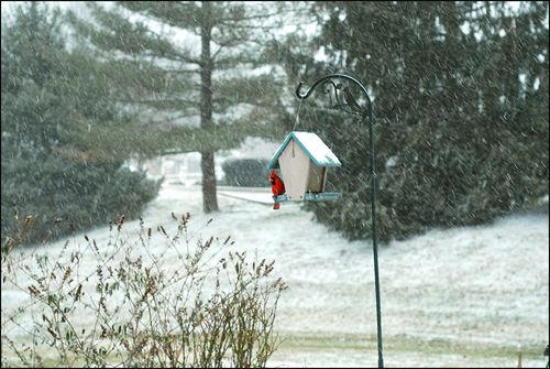 Cardinal snow blog