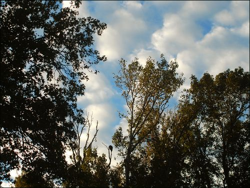 Eagle sky blog