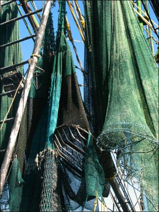 Nets ready blog