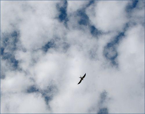 Swallow tail kite blog