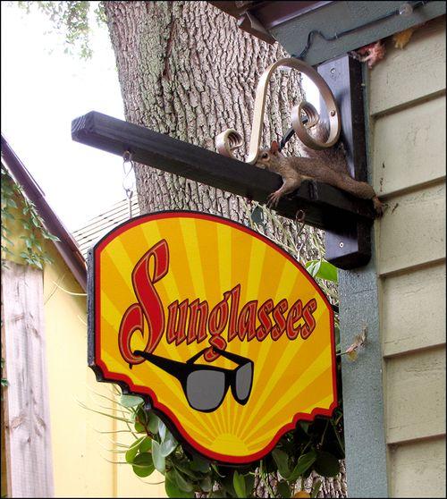 Squirl sunglsses blog