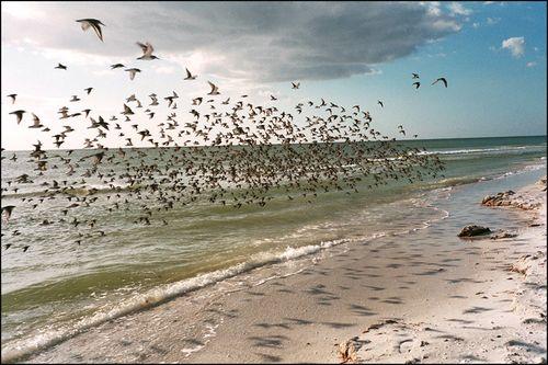 The birds tigertail blog