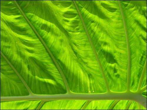 Leaf upcllose blog