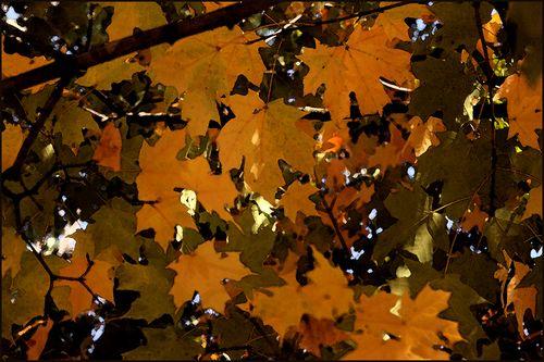 Golden leaves blog
