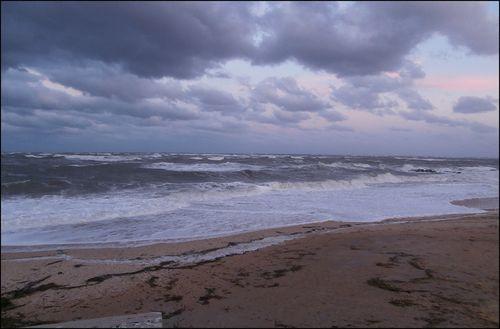 Wild waves blog