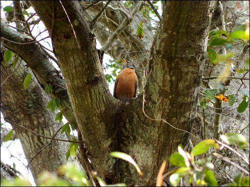 First robins blog