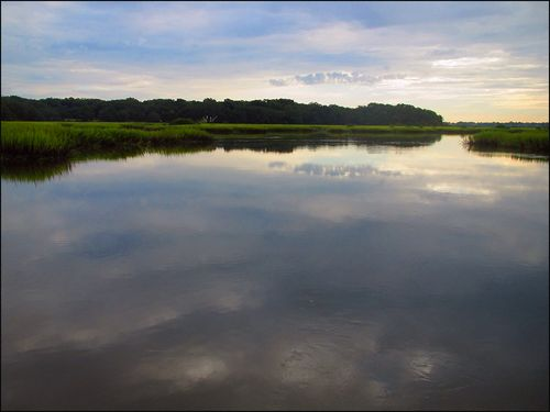 Marsh blog