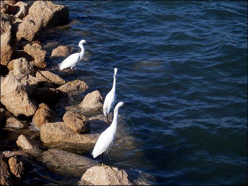 Egrets fortblog