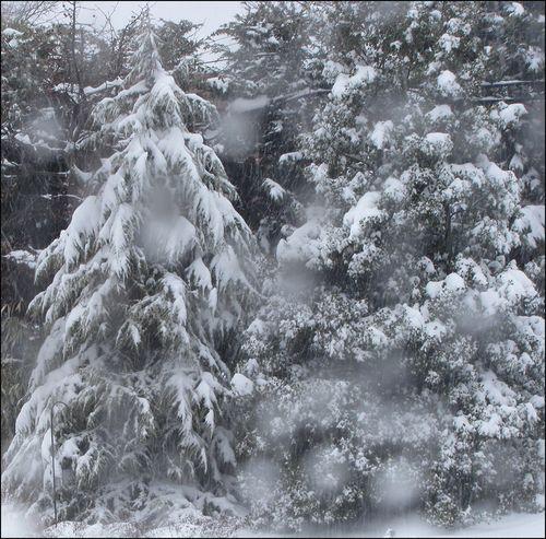 Snowdeodra blog