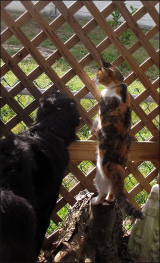 Fence kity85 blog