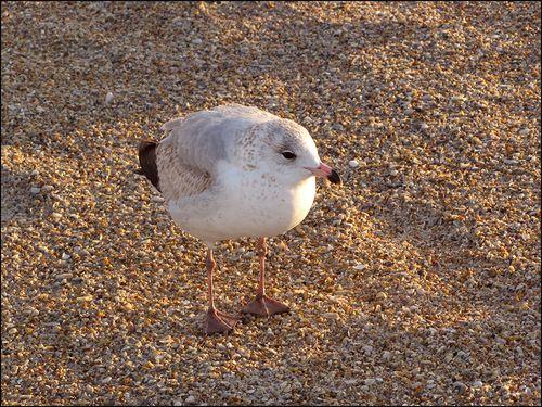 Gull so? blog