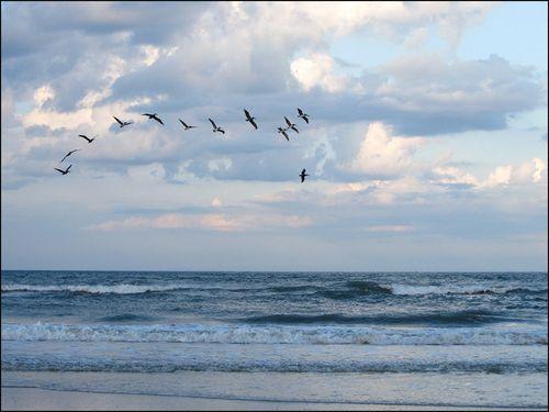 Pelicans overocn blog