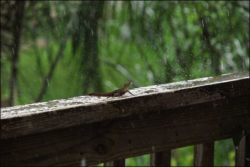 Lizd rain172 blog