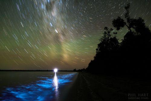 BioluminescenceMW_PhilHart