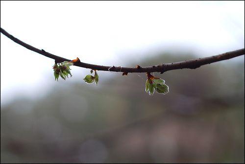 Spring promise blog