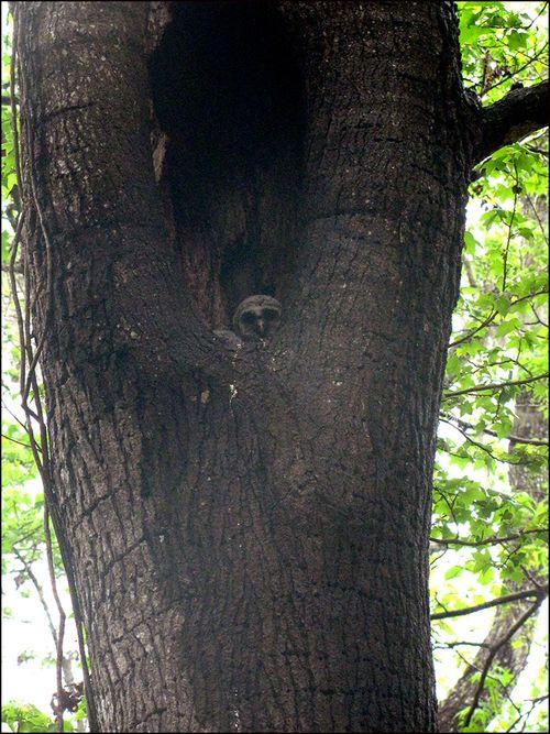Owls tree blog