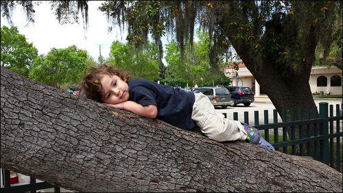 Aden tree 04.15 25520