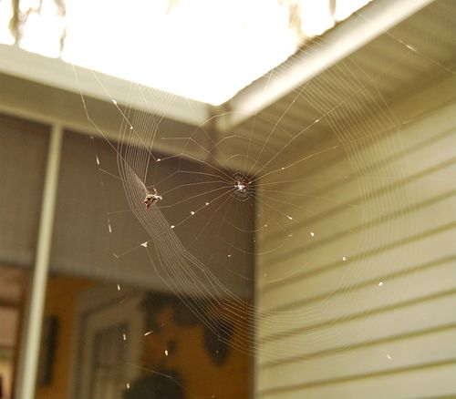 Spider 07.02