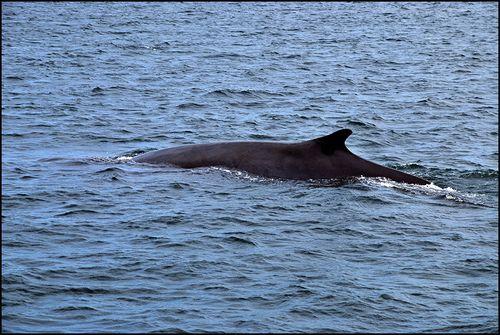 Whales_0279 blog