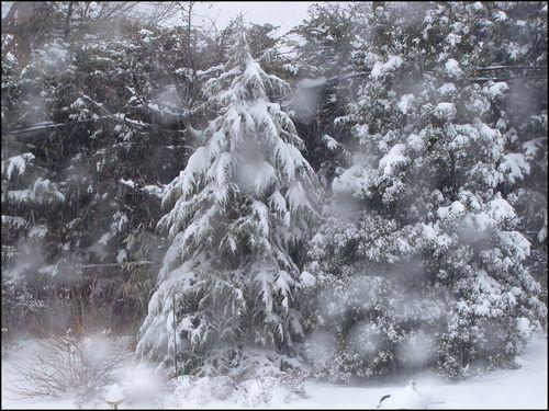 Snow balto14 blog