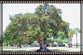 Cypress full0600 blog