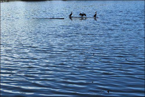 Pond 06.10