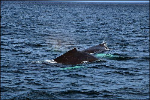 Whales0302 blog