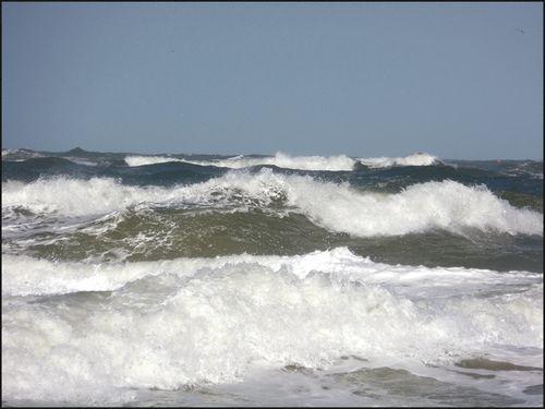Wild ocean04.17
