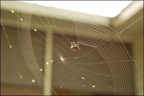Spider07.02