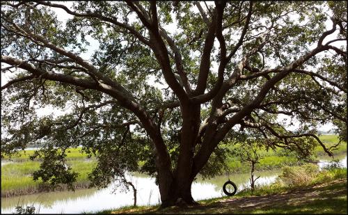 Oaktree swng1251blog