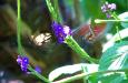 2 Butterflies in Motion2