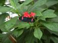 5 Butterflies