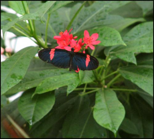Butterfl key wblog