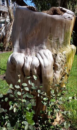 20181016_treetrnkblog