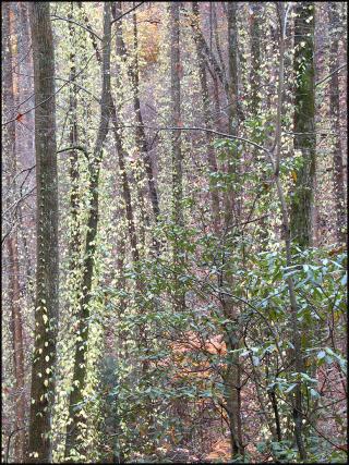Trees Paperblog