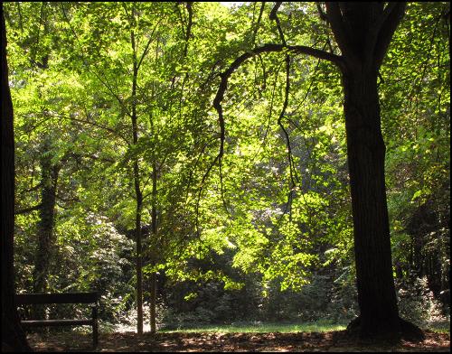 Forest blog2020.9