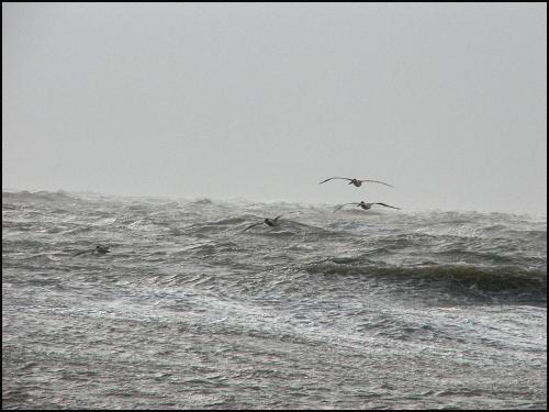 Wild waves peli2blog