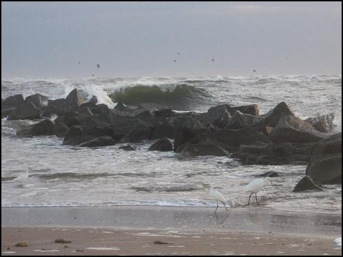 Wild waves egrtblog